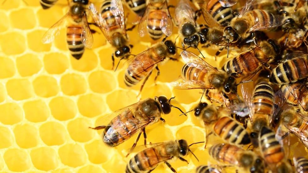 Пчелното семейство е един уникален и съвършен биологичен организъм.