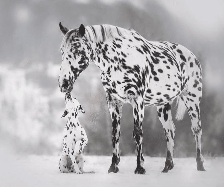 Най-добрите породи коне в света
