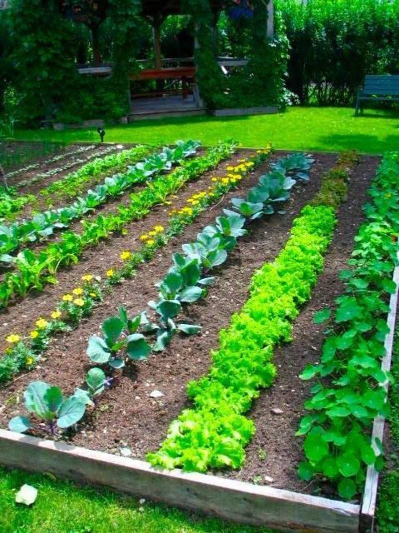 Как да се грижим за зеленчуците през месец Май. Какви грижи имаме за зеленчуците в градината.