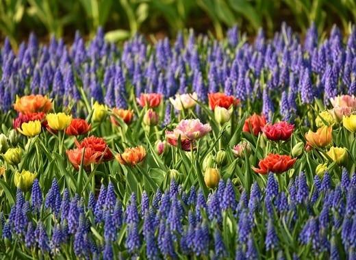Как да се грижим за цветята в градината през месец Май. Как да подхраним цветята в градината.