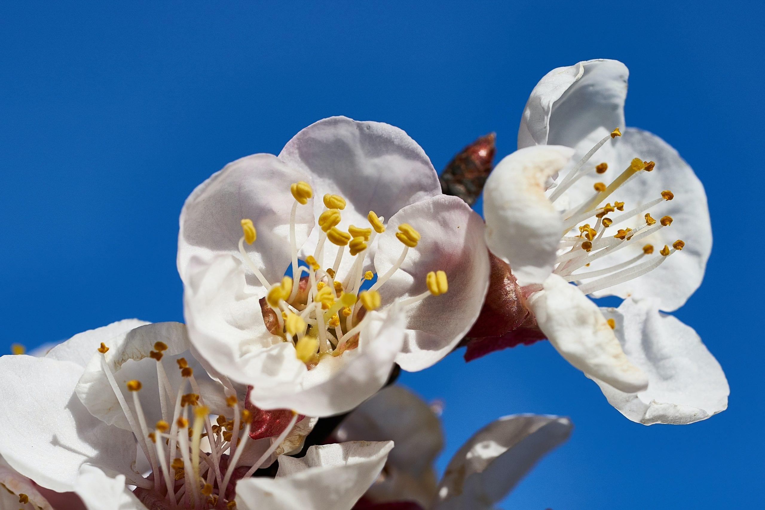 Как да се грижим за пчелите през месец Април?