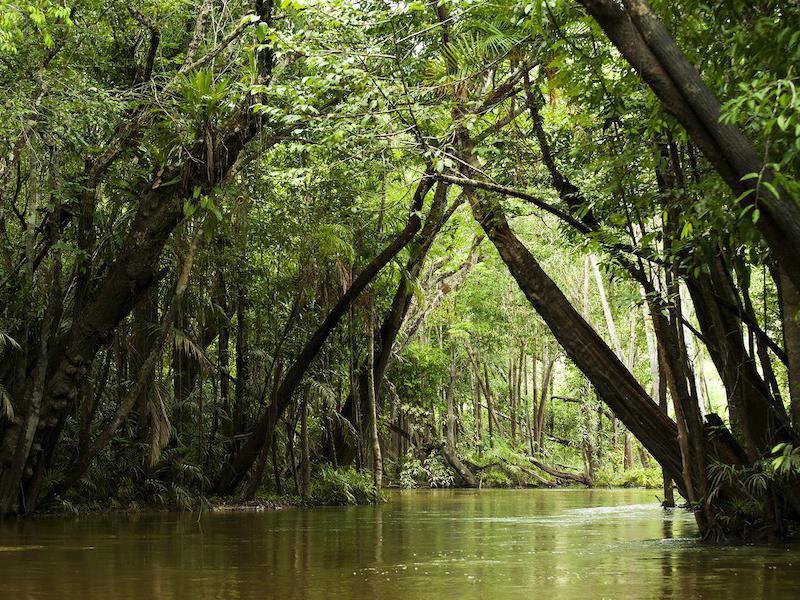 Река Амазонка е най-пълноводната река в света и спомага за производството на 20% от световния кислород.