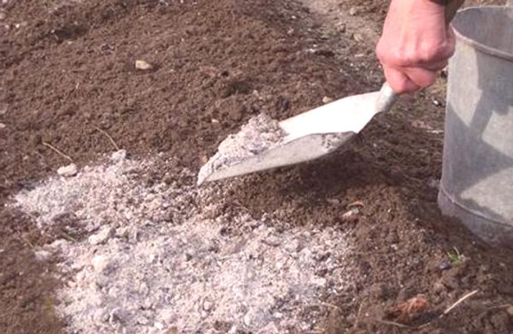 Дървесната пепел е изключително полезна в градината. С нея можем да защитим и подхраним нашите растения.