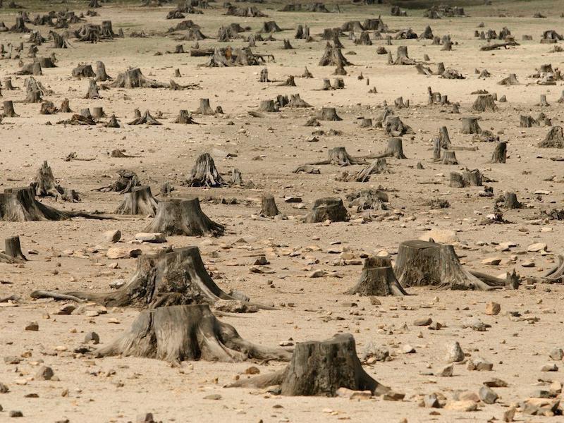 Има държави по света, в които изобщо няма гори.