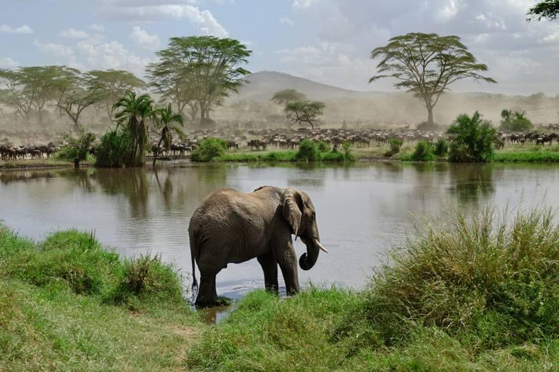 Национален Парк Серенгети, намиращ се в Танзания е идеалното място за африкански приключения.