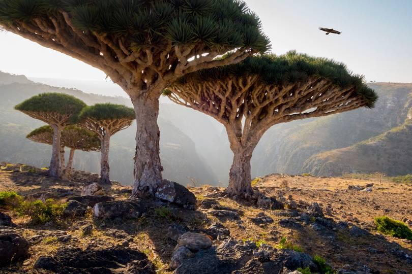 Сокотра е островна група в Индисйкия океан, и принадлежи на Йемен. Изключително красиви дървета и местности.