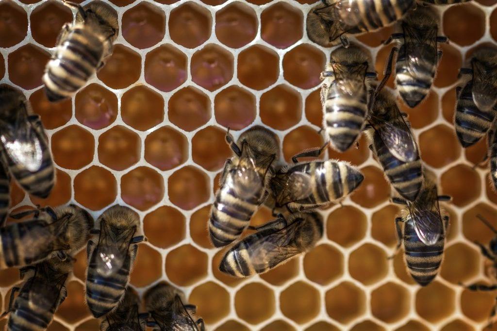 Пчелният мед е изключително ценна храна за човека и трябва да се консумира често.