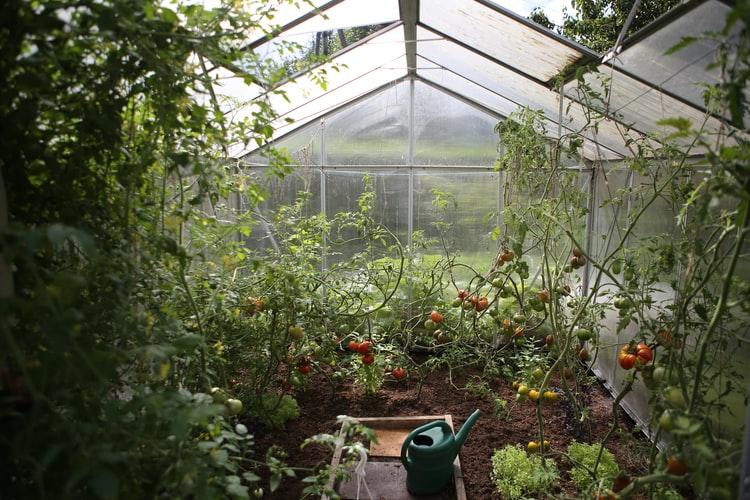 Как да се грижим за зеленчуковата градина през месец Юни - съвети.
