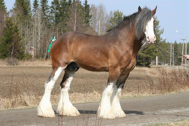 Клайдсдейл кон