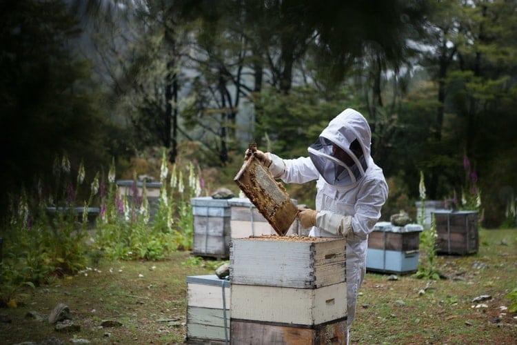 Как да създадем силно пчелно семейство с помощта на 2 магазина отгоре?