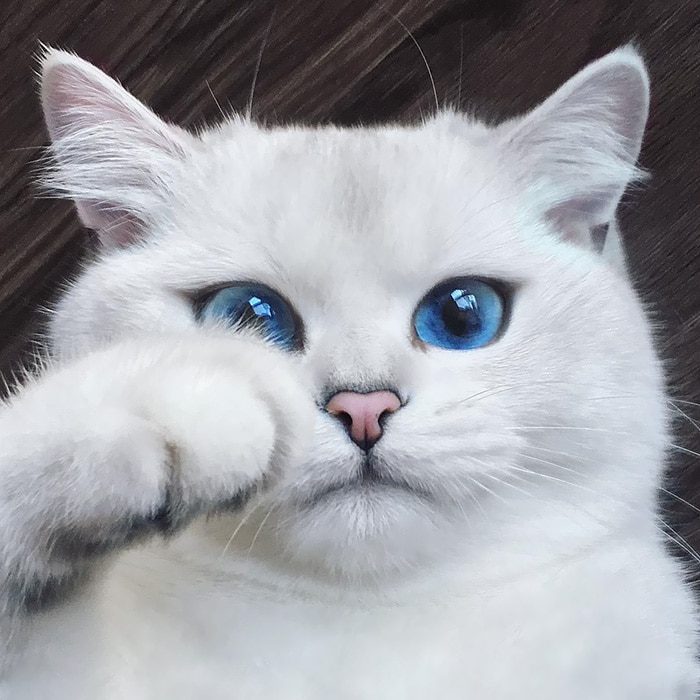 Коби е изстински красавец. С тези сини очи е неустоим за всички дами.