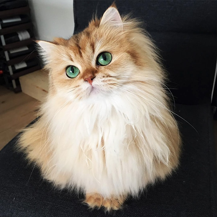 Това е Смути - най-фотогеничната котка на света.