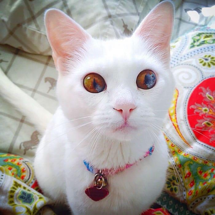 Това сладко коте има очи като на вселената