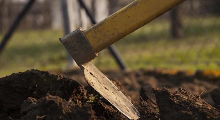 Как да окопаваме фасула в градината. Как правилно да окопаваме зеления фасул.