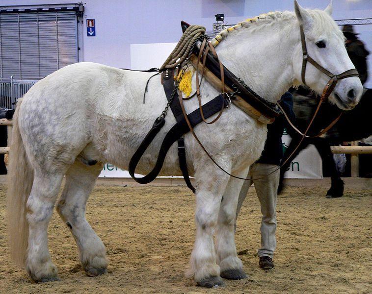 Першерон най-силните коне на света