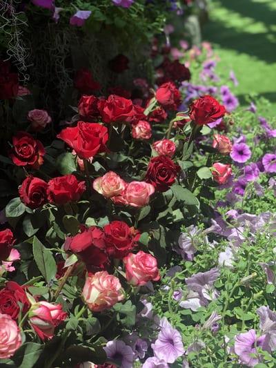 Какви цветя да засадим през месец Юни?