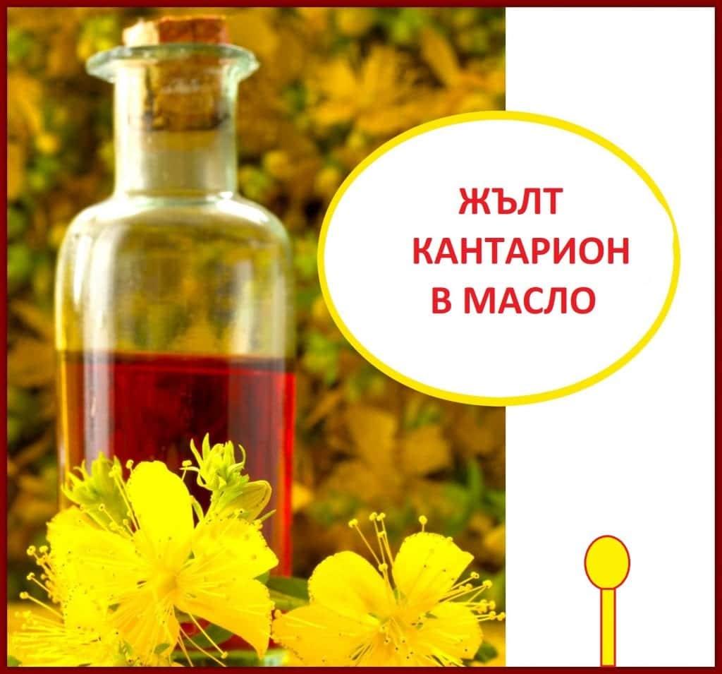 Как да направим жълт кантарион в масло - зехтин, олио? Как да използваме жълт кантарион?