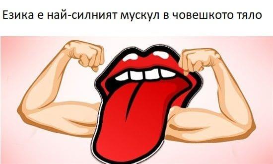 Езика е най-силният мускул в човешкото тяло - Интересни и любопитни факти от света