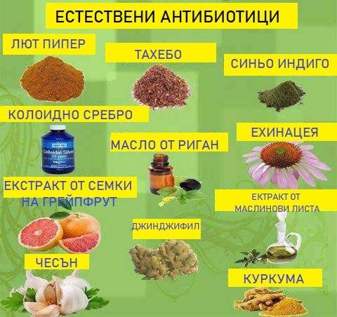 Масло от риган - естествен антибиотик. как да се лекуваме с билката риган