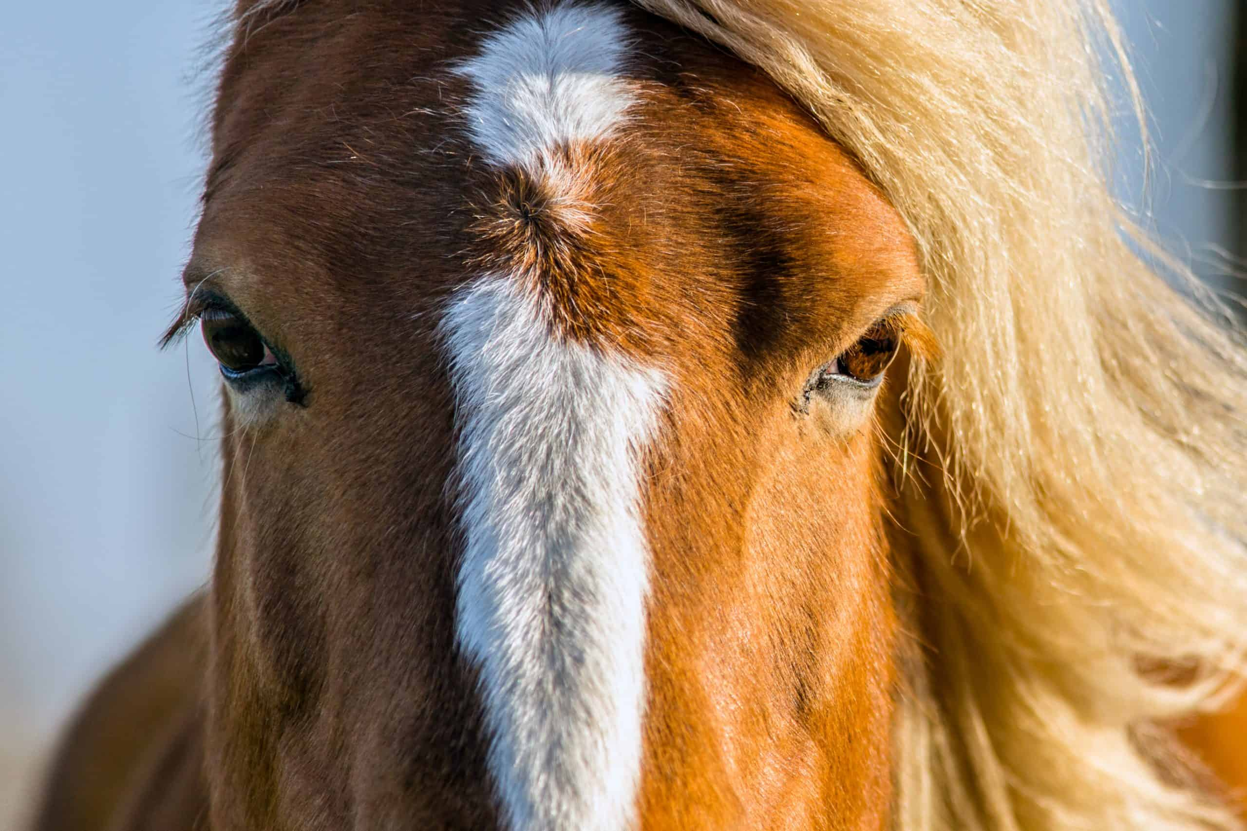 Конете виждат на 360 градуса - интересни и любопитни факти за конете.