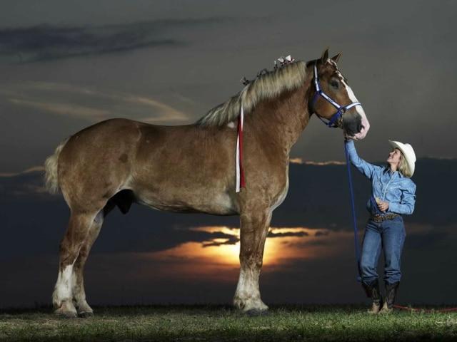 Най-високият кон на света
