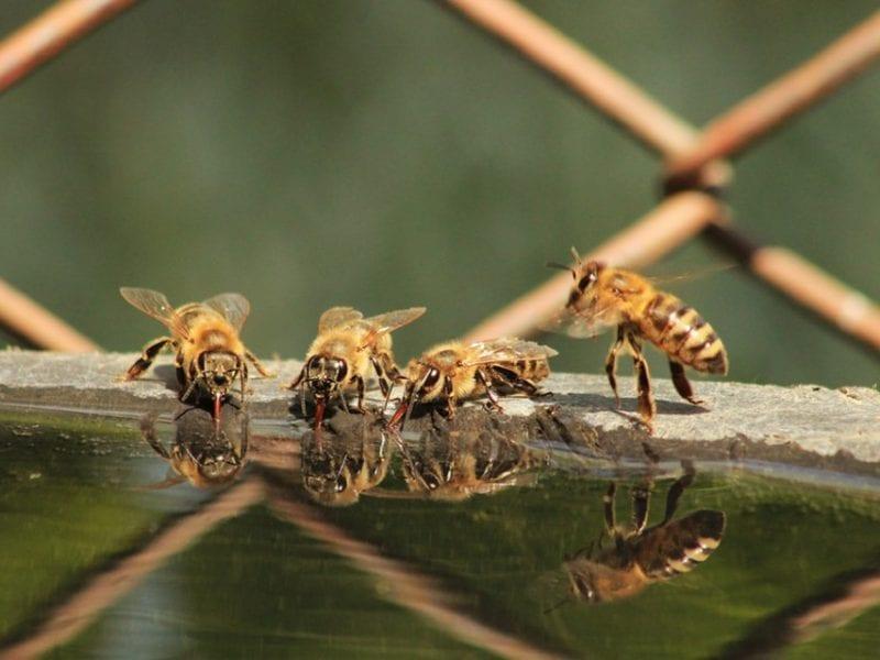 Поилка за пчели. Как да направим.