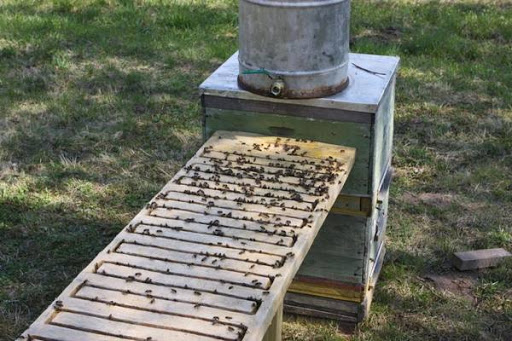 Поилка за пчели. Как да направим. Как да се грижим за пчелите през август?