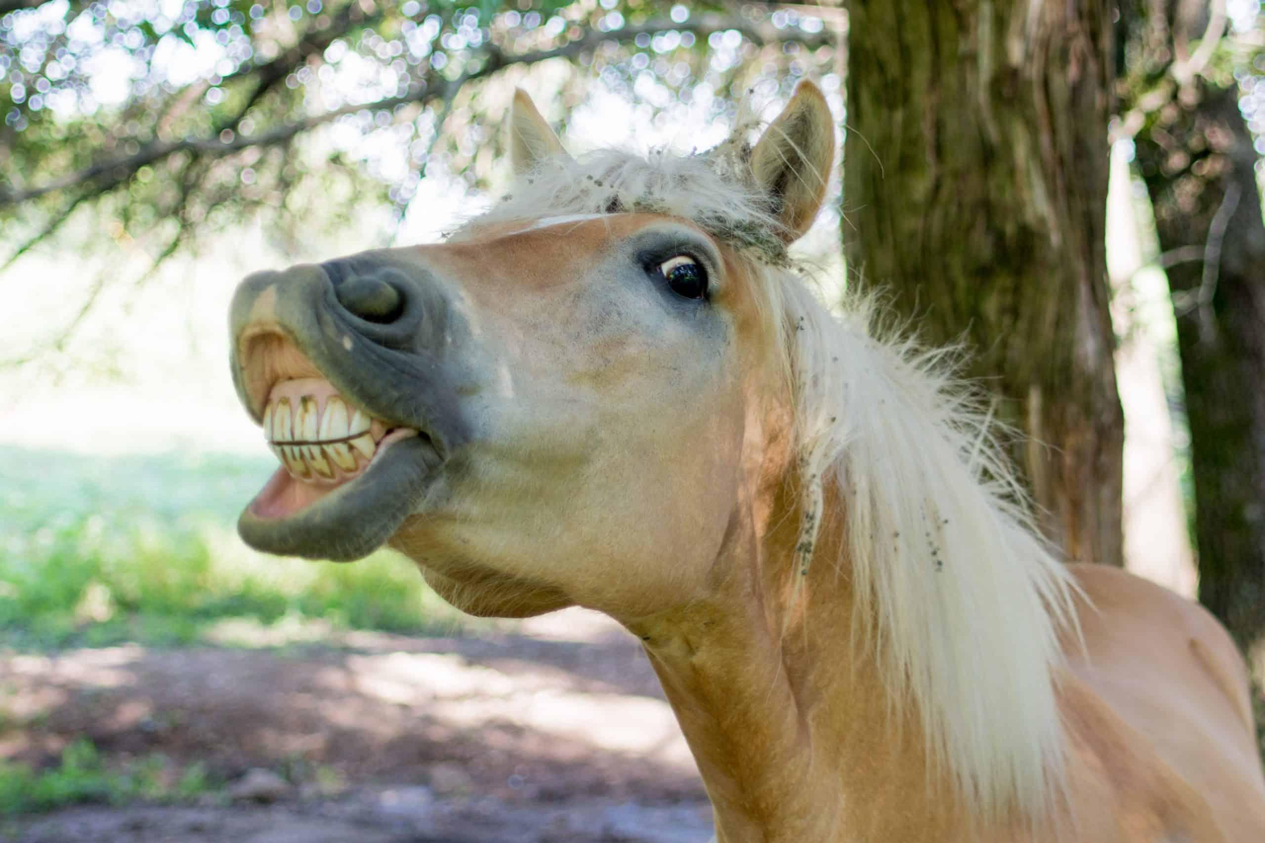 Конете и техните зъби