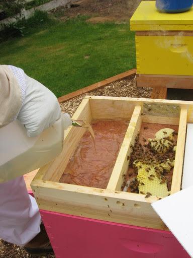 Подхранване на пчелите със захарен сироп. Как да направим сироп за пчелите?