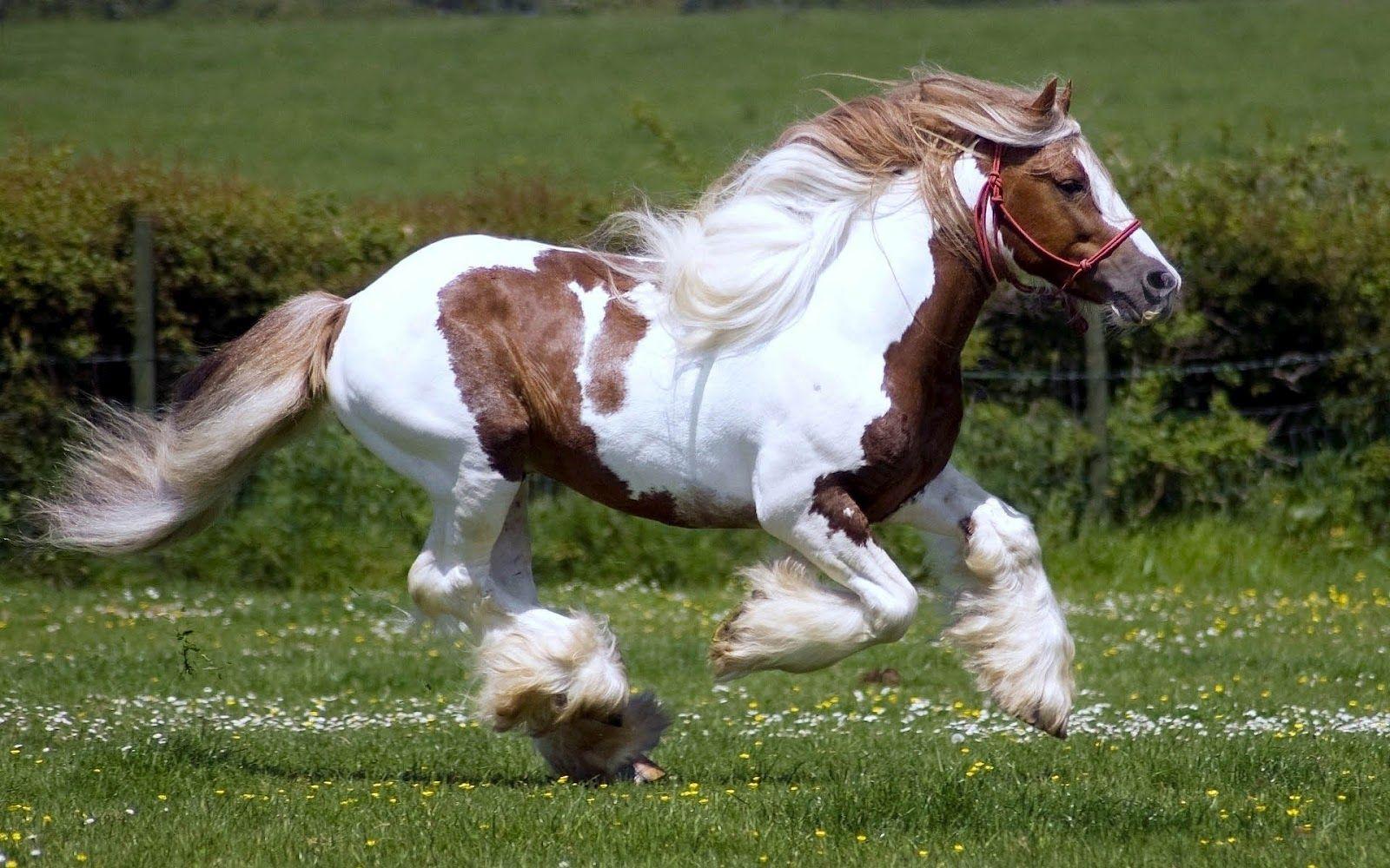 Скоростта при конете