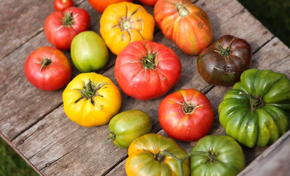 Как да използваме зелените домати в градината