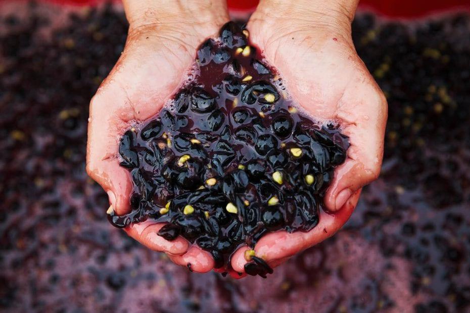 Как да направим домашно вино от грозде