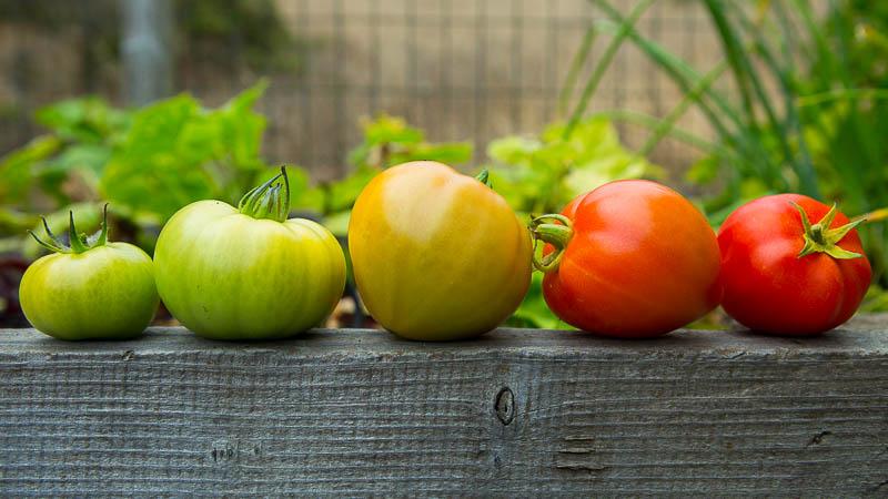 Как да узреят зелените домати - как да използваме зелените домати.