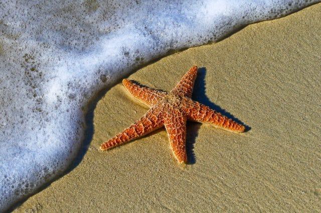 Морска звезда - топ 10 факти за вирусите