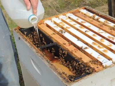 Подхранване на пчелите с инвертиран сироп през есента. Как да зазимим пчелите през есента?