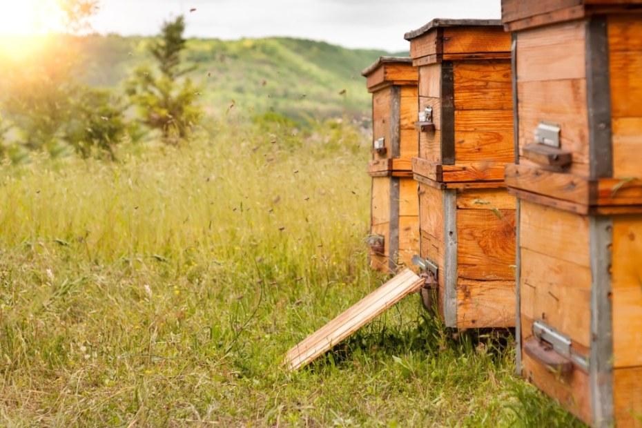 Пчелите през есента