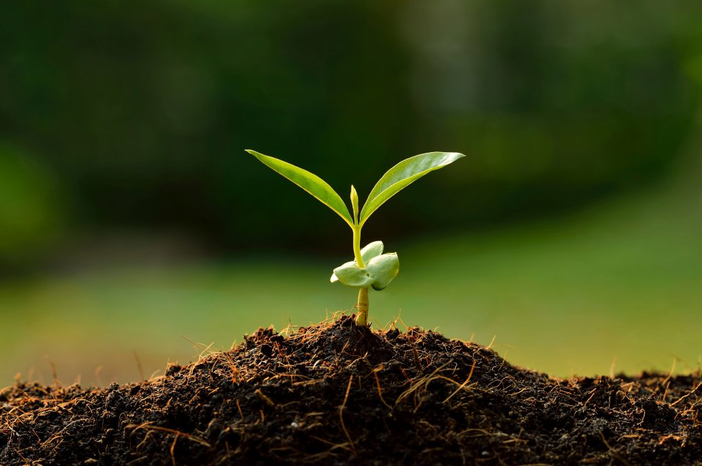 Как да отгледаме овошки от семена и костилки