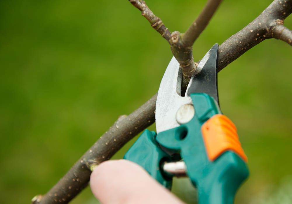 Есенно подрязване на овошните дръвчета - как да се грижим за нашите овошки.
