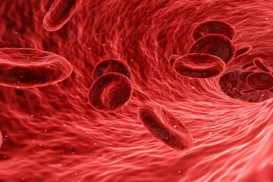 Как да изчистим кръвоносните съдове с подходящи билки и храни