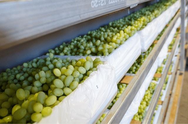 Как да съхраним гроздето