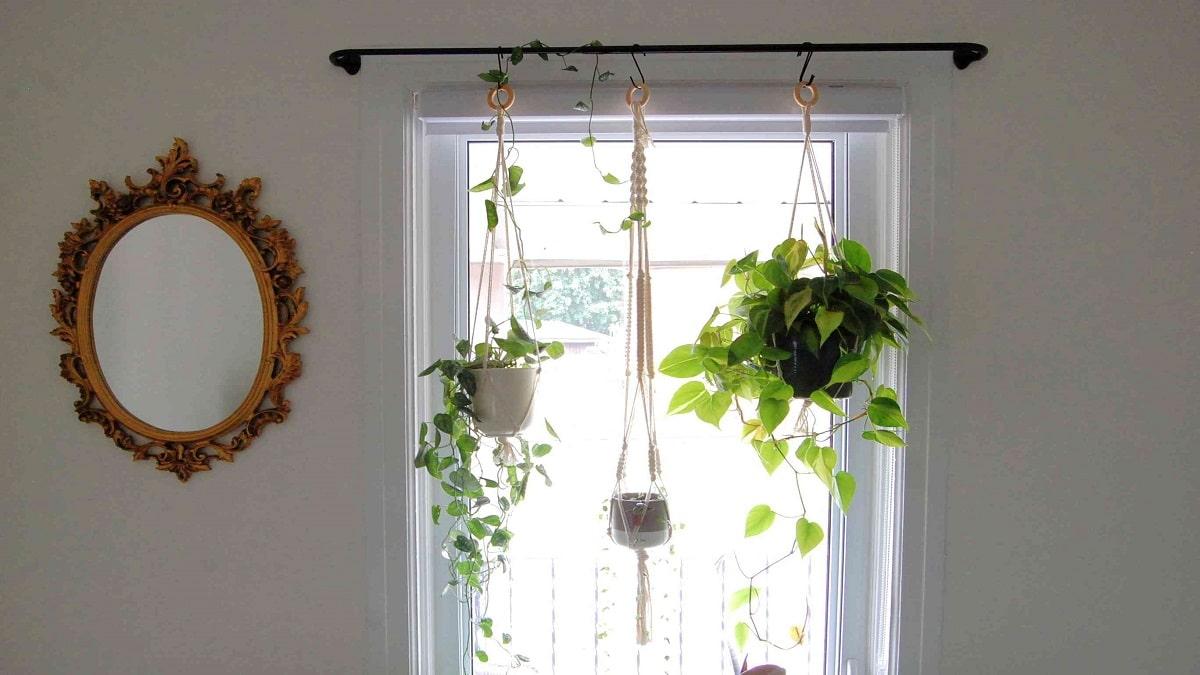 Създайте живи завеси от цветя у дома - как да направим висяща градина