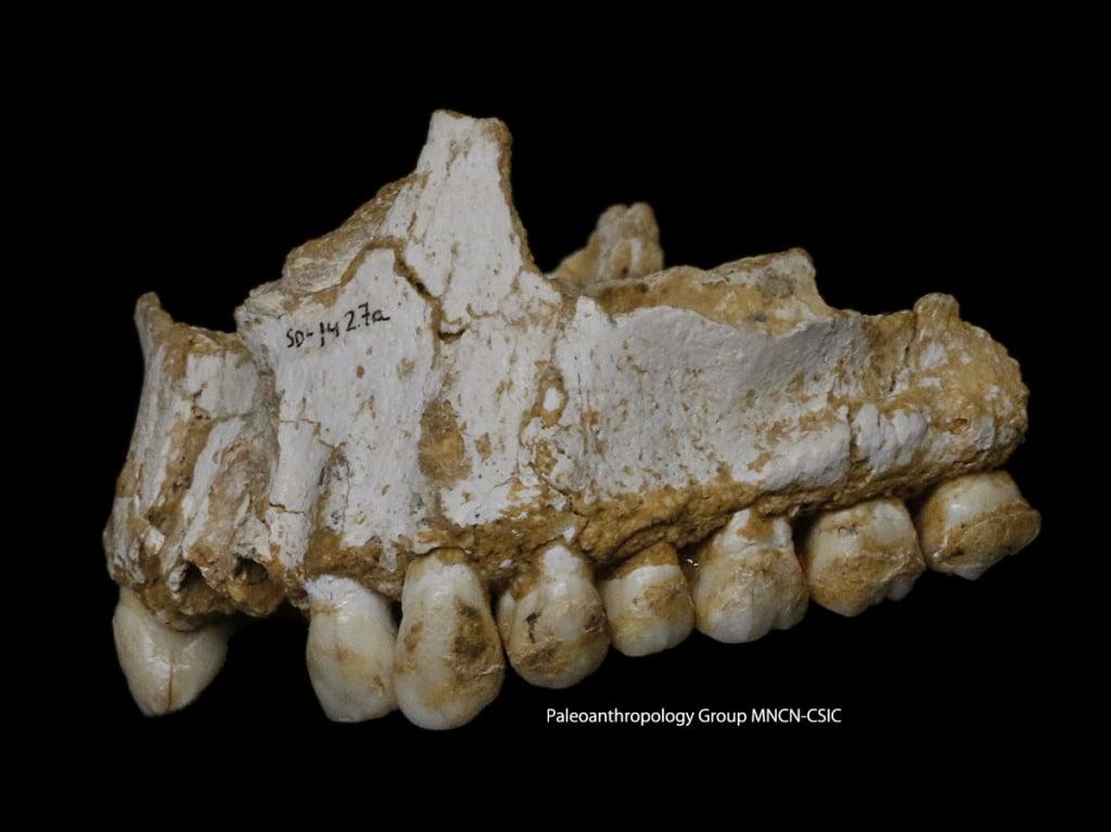 Неандерталски медицински познания - 10-те най-големи археологически открития