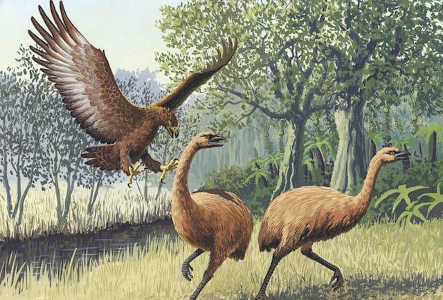 Орелът на Хааст - древни митове които се оказаха реални