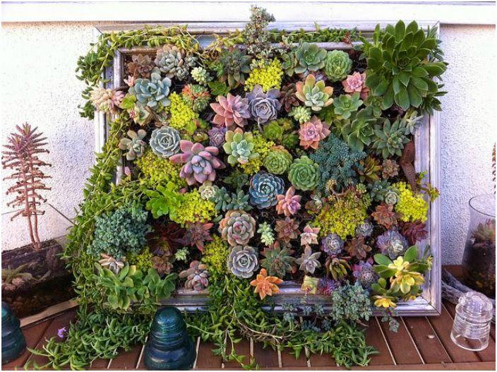 Произведение на изкуството - как да направим висяща градина.
