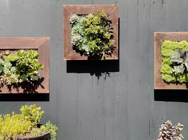 Стенни рамки за сукуленти - как да направим висяща градина