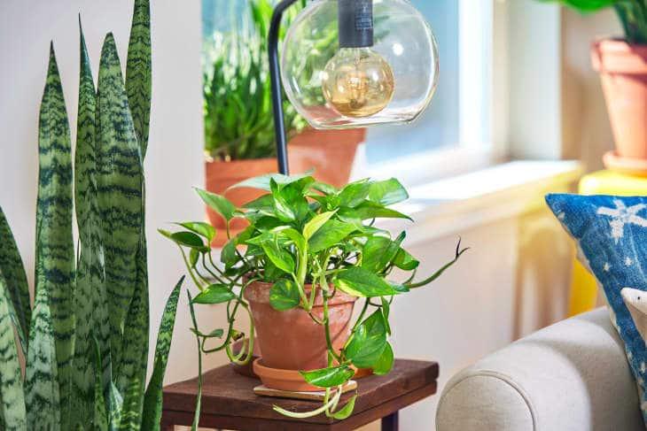 Станете растениевъд - най-горещите тенденции в дизайна през 2021