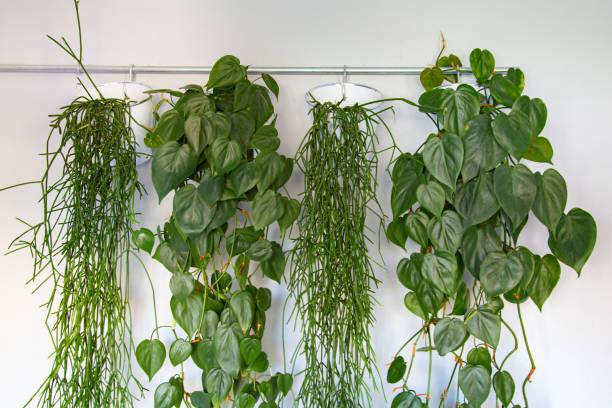 Закачете растенията върху стара окачалка за дрехи