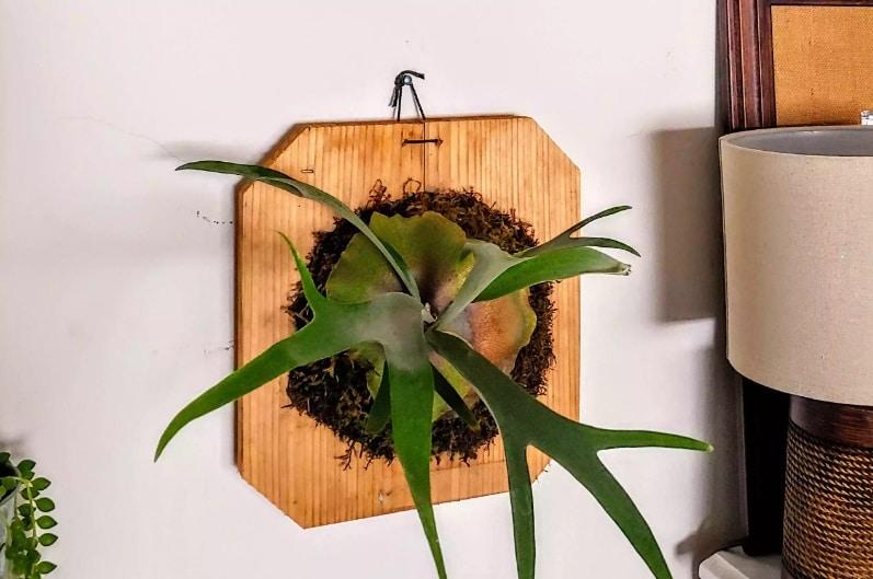 Монтирани растения - как да направим висяща градина