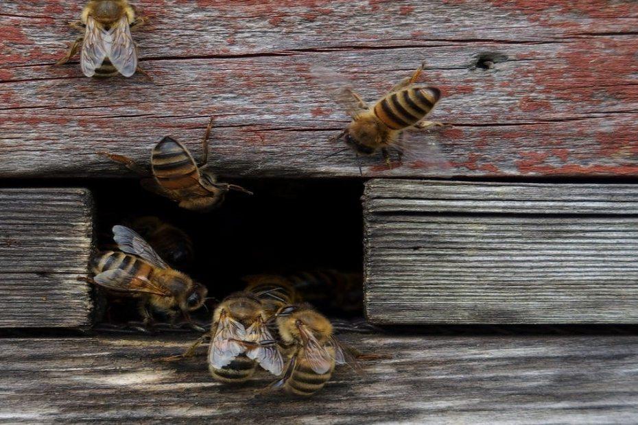 Как да подобрим живота на пчелите