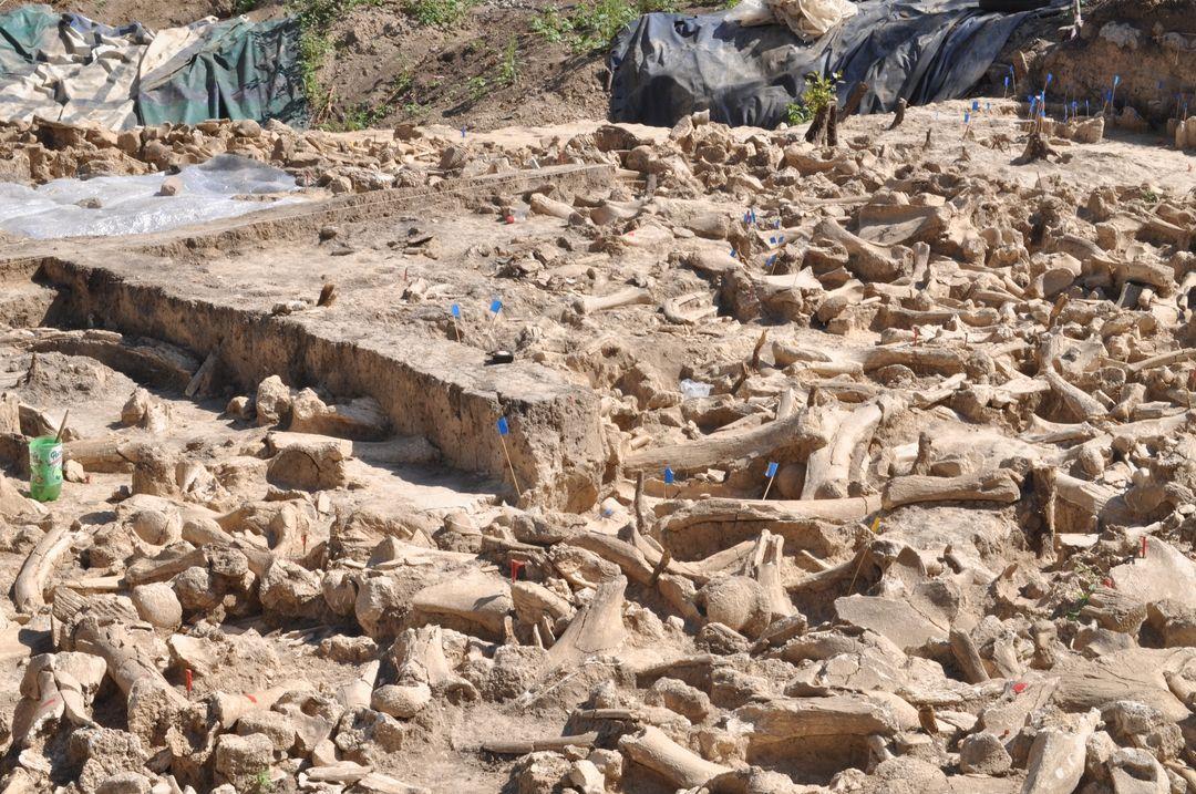 Структура на мамут - най-големите археологически открития през 2020